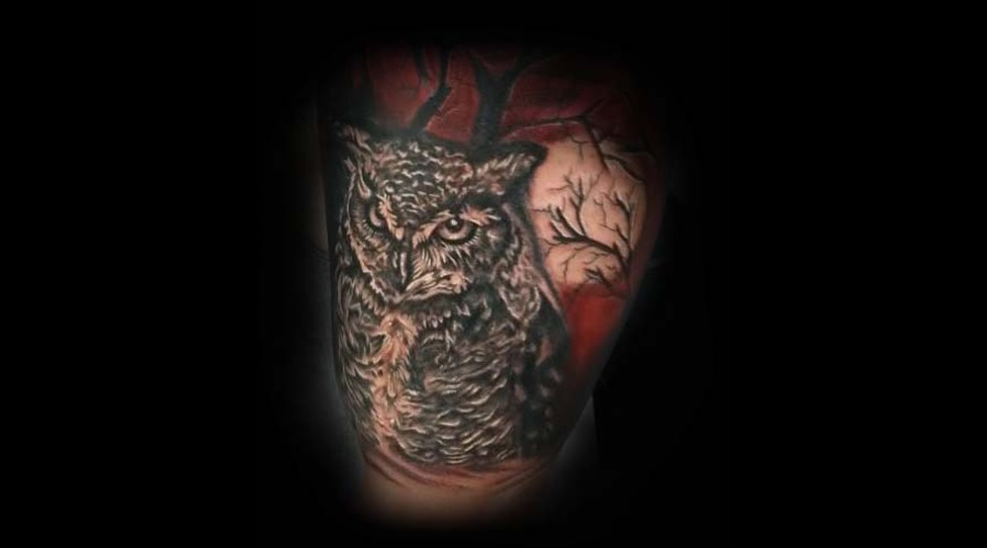 Owl  Mean  Moon  Trees Arm