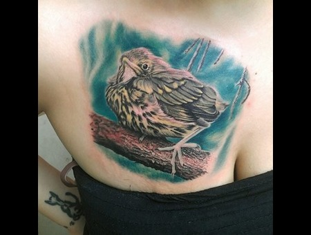 Bird Realism Feather  Chest