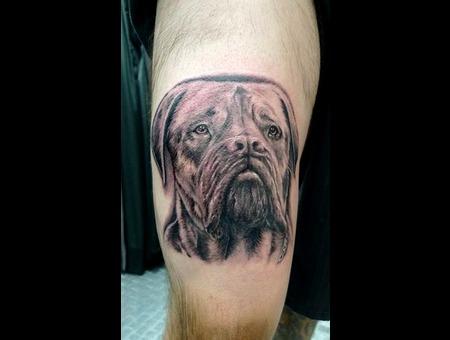 Dog   Loyal   Portrait