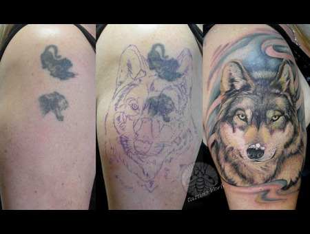 Cover Up  Wolf Color