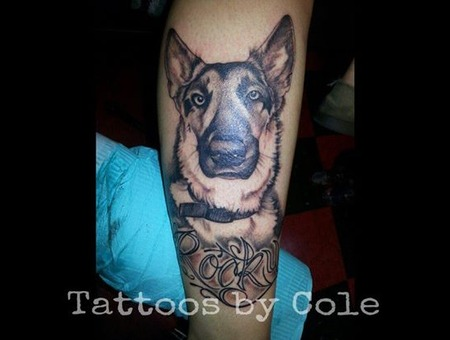 Portrait  German Shepard  Dog Lower Leg