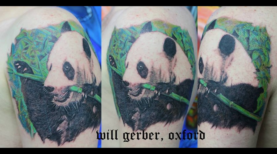 Animal  Panda  Wildlife Shoulder