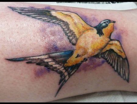 Swallow Colour Bird Lower Leg