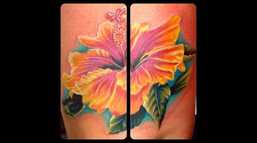 Colour  Colour  Flower  Floral  Hibiscus Arm
