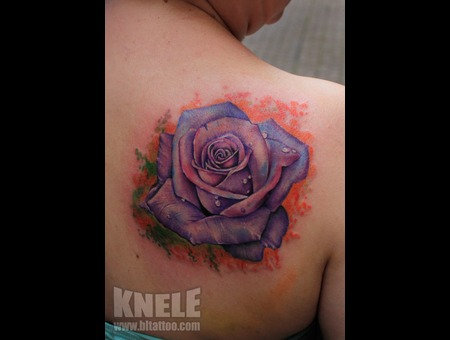 Rose Colour Flower Purple Back