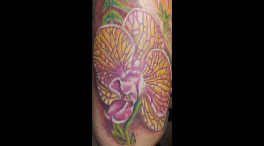 Flowers  Orchid  Feminine  Realism Arm