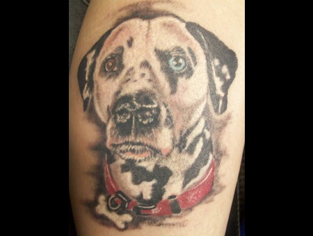 Dog  Portrait  Color Realism Lower Leg
