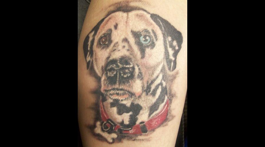 Dog  Portrait  Color Realism Lower Leg
