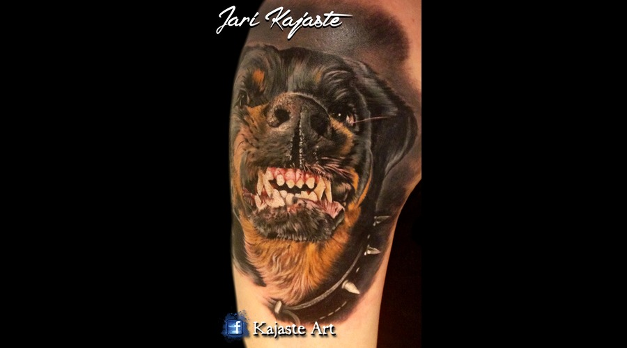 Rottweiler  Dog  Portrait Arm