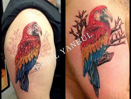 Bird  Parrot  Polly  Popinjay Arm