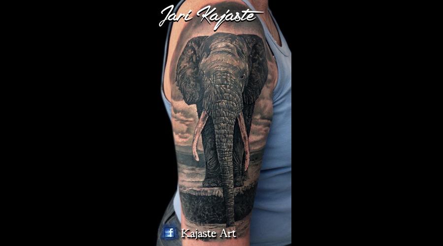 Elephant  Nature  Animals Arm