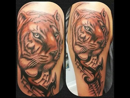 Tiger Tattoo  Cat Tattoo Arm
