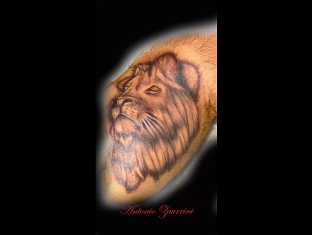 Lion Lower Leg