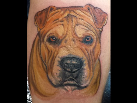 Realism  Color Portrait  Animal Portrait Forearm