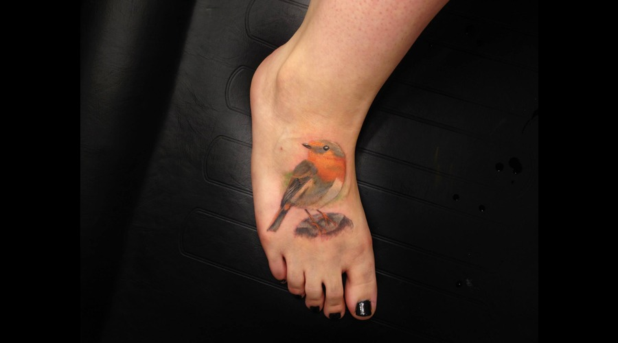 Animal  Bird  Robin  Realism  Cute  Orange Foot