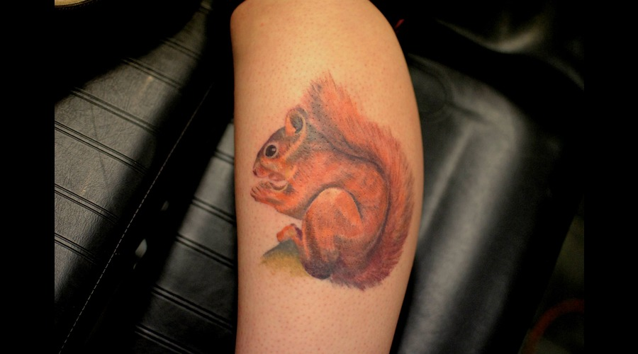 Animal  Squirrel  Cute  Realism  Love   Lower Leg