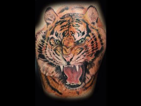 Tiger Big Cats  Lower Leg