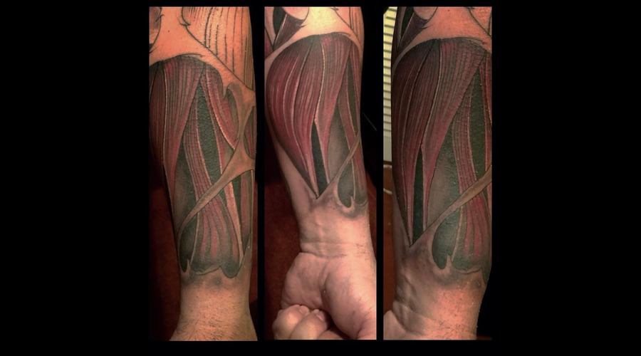 Muscle Freehand Forearm