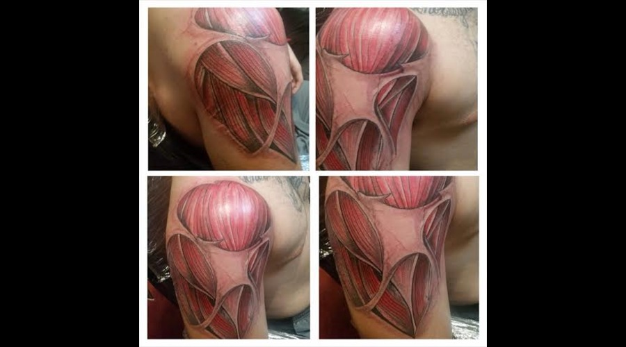Muscle Work Freehand Shoulder