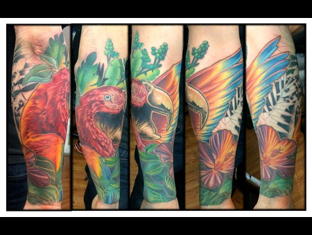 Mccaw  Parrot  Fern  Foliage  Bird  Color  Realism  Tropical Forearm