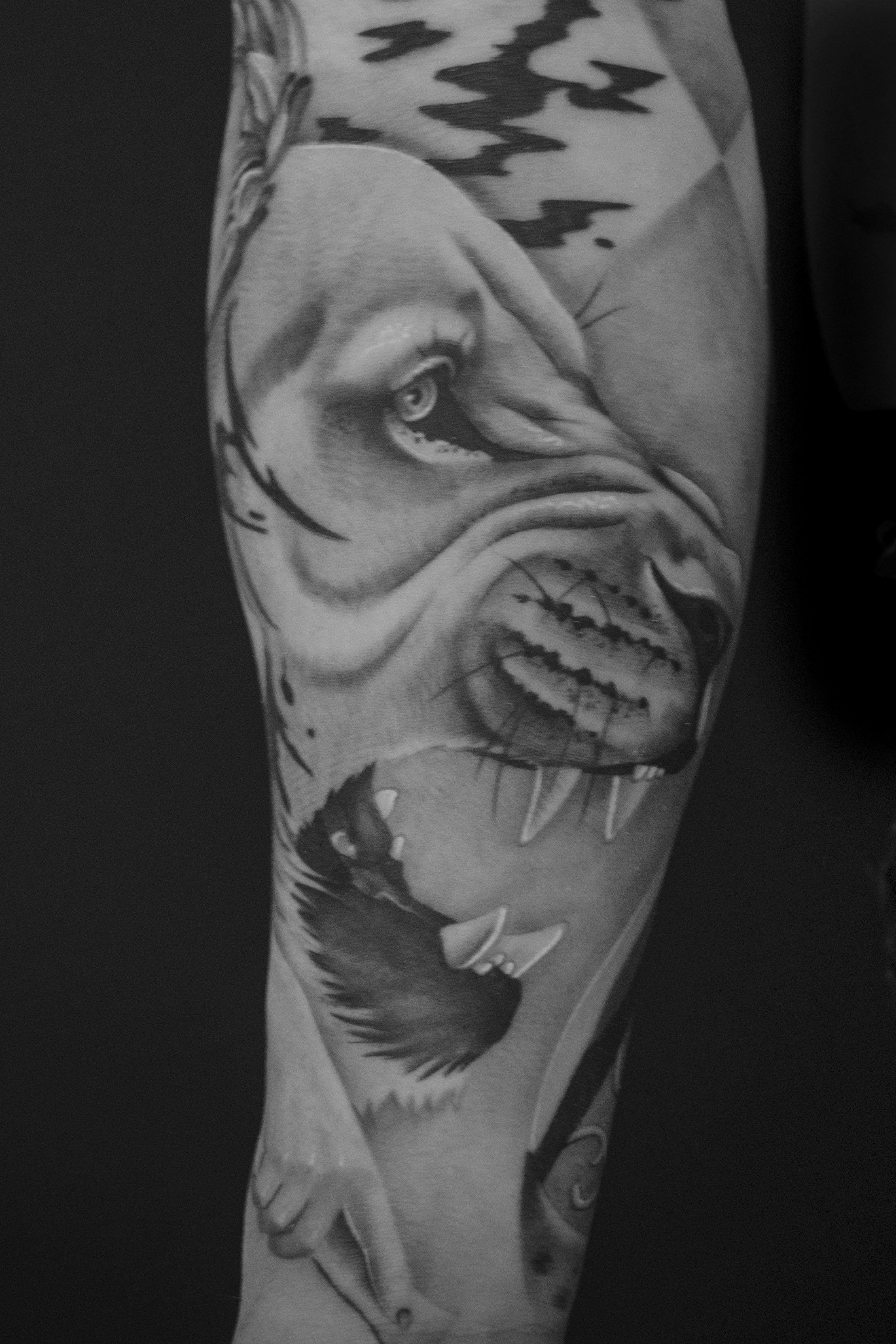 d7bc592a49bef Lion Lion Tattoo Realism Photo Realism Black & Grey Tattoo Black& Whit