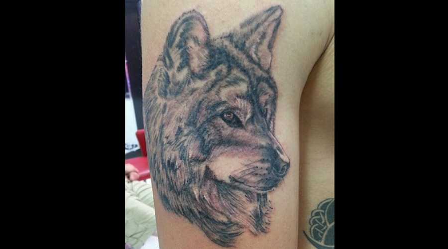 Wolf  Portrait  Wild Life  Black And Grey  Realism  Hawaill Arm