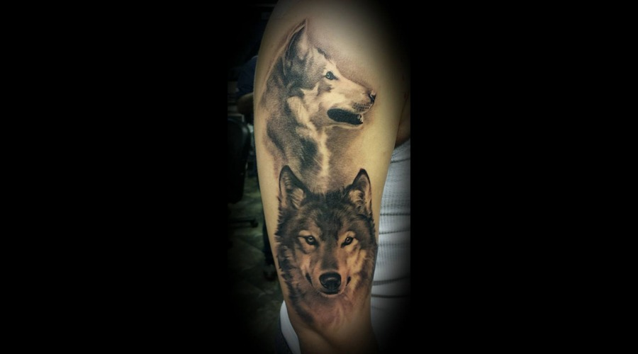 Wolf  Wolves  Wildlife  Realistic  Portrait  Black And Grey Arm