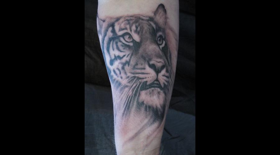 Tiger Tattoo  Tiger Portrait Arm