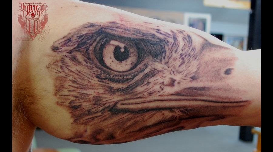 Eagle Eye Realistic Portrait Detail Feather Arm