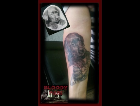 Dogportrait  Dog Portrait  Portrait  Labrador  Best Friend Arm