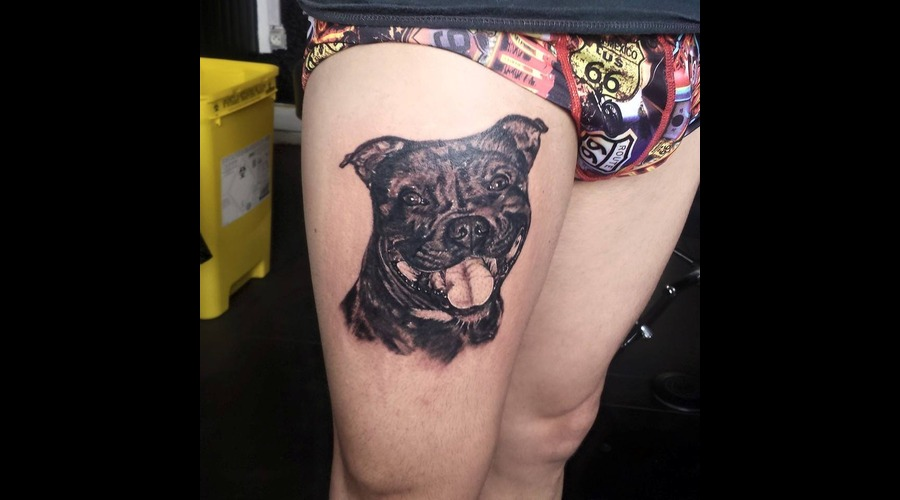 Staffie Staffordshire Bull Terrier Dog Realistic Realism Thigh