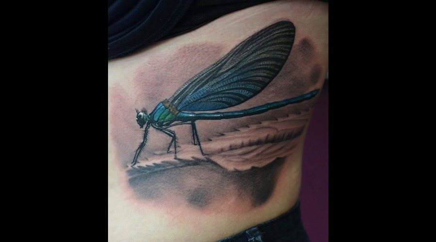 Dragonfly Ribs