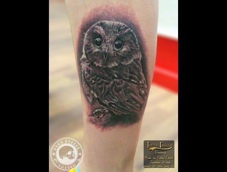 Owl Lower Leg