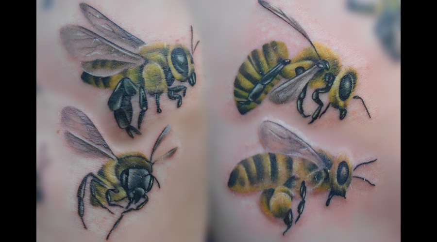 Bees  Bugs  Wings  Nature Thigh