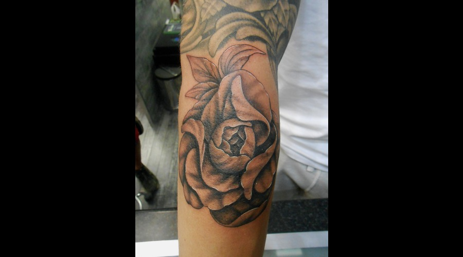 Flower  Nature  Peony  Leaves Forearm