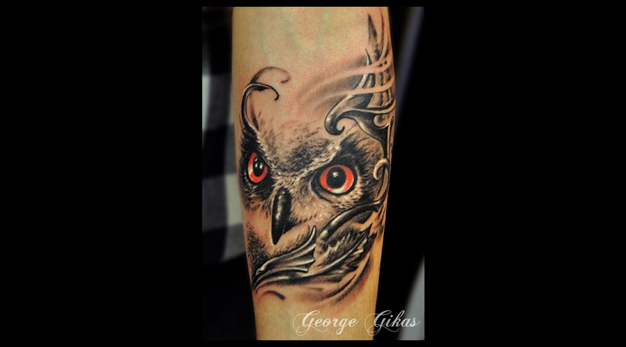 Owl  Animal  Arm