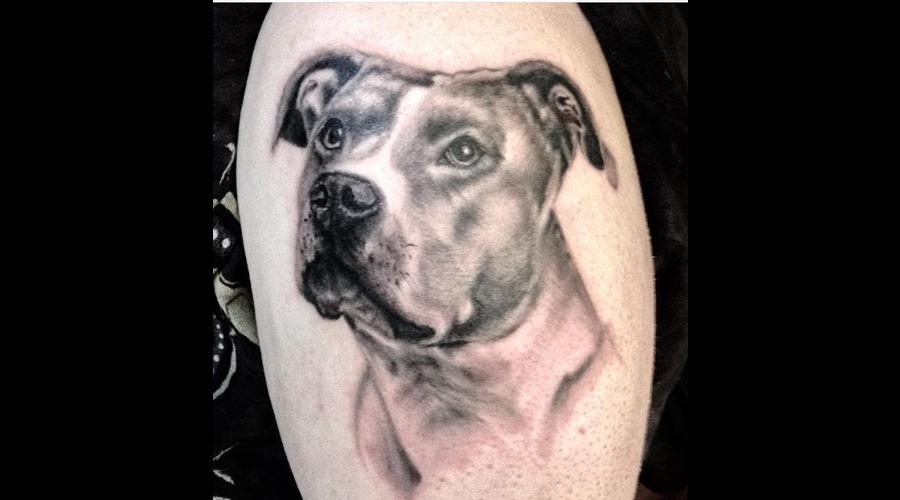 Pitbull Dog Portrait  Arm