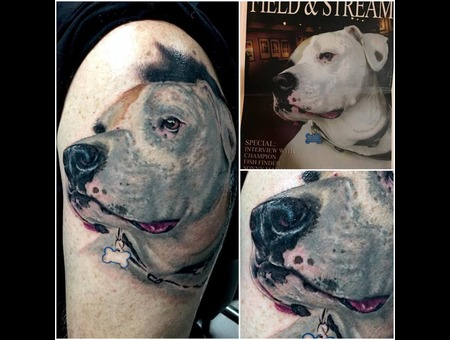 Portrait  Dog  Bulldog  Pets  Pet  Love  Cute  Arm
