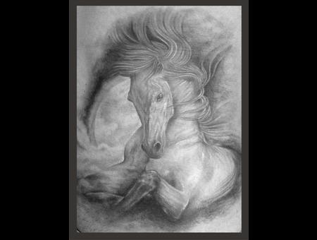 Horse Ribs