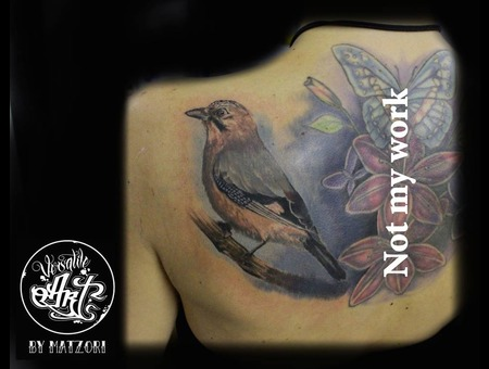 Jay  Realistic  Color  Colorrealistic  Bird  Birdtattoo Shoulder