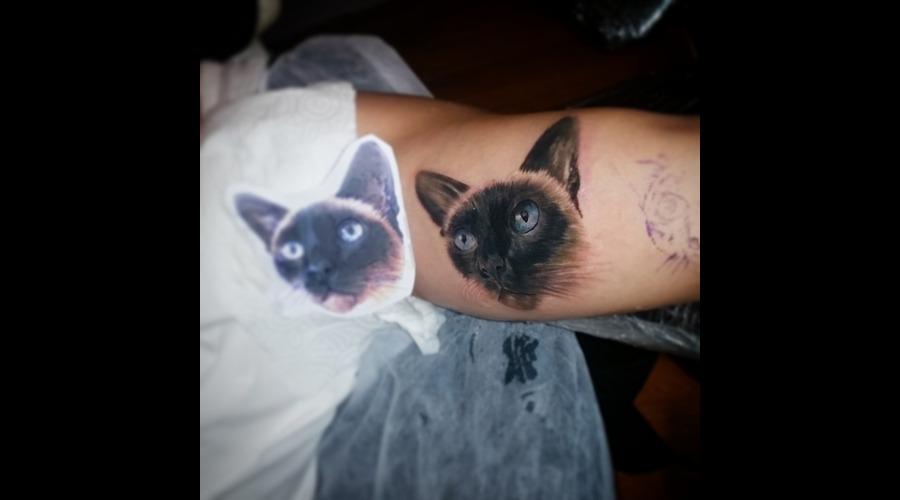 Cat Arm