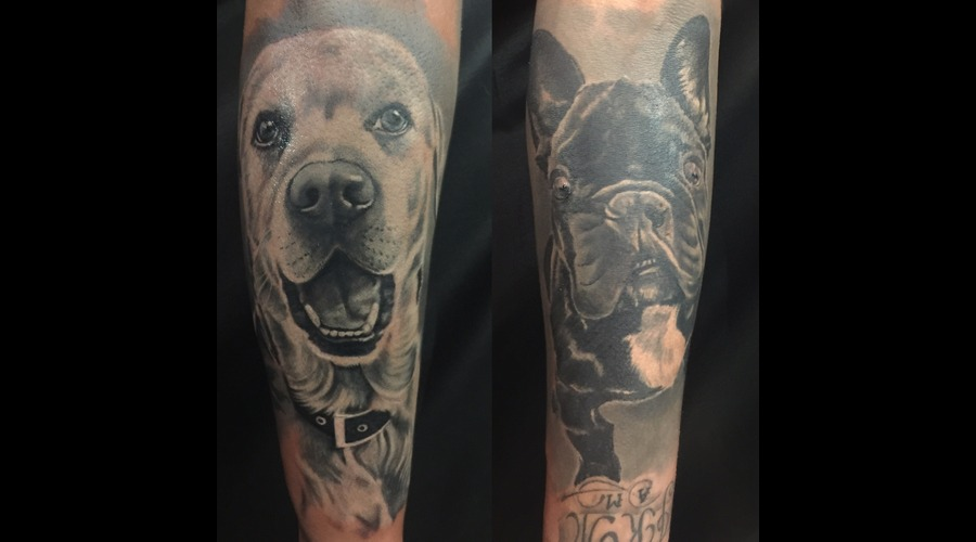 #Dog #Frenchbulldog Forearm