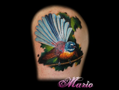 Bird Color Shoulder