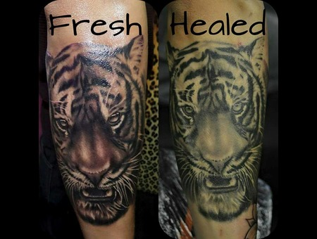 Tiger Black Grey Forearm