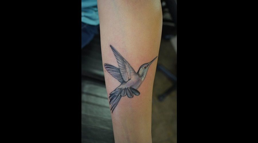 Bird  Hummingbird  Realism  Flying  Color Color Forearm