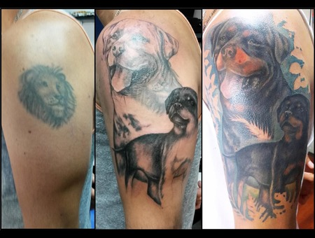 Cover Up  Realism  Rottweiller  Dogs  Color Color Arm