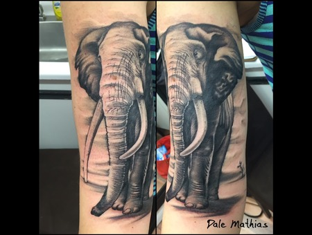 Black And Grey  Elephant  Jungle  Animal Portrait Black Grey Forearm