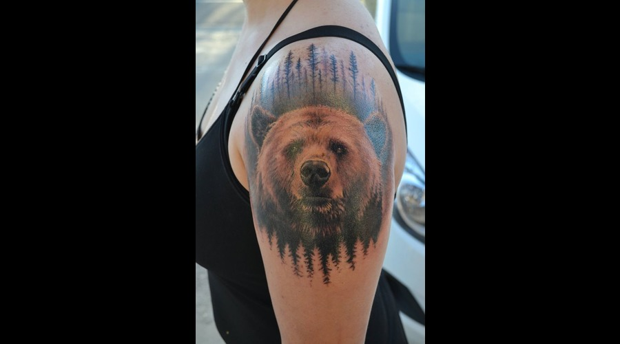 Bear  Nature  Grizzly  Realism Color
