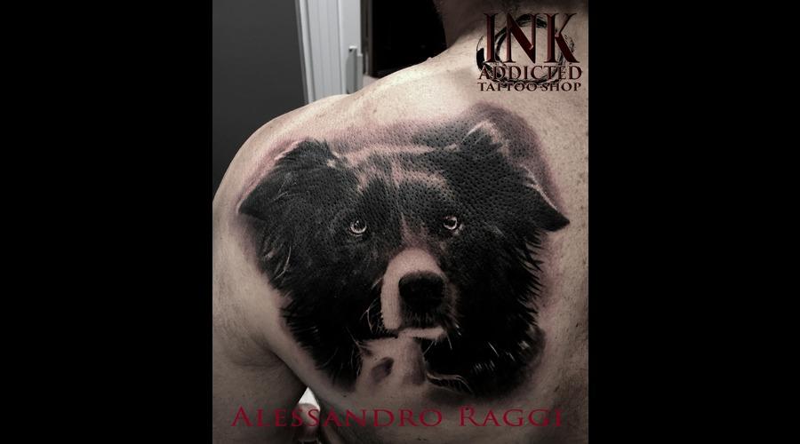 Dog Realistic Animal Portrait Black Grey Shoulder