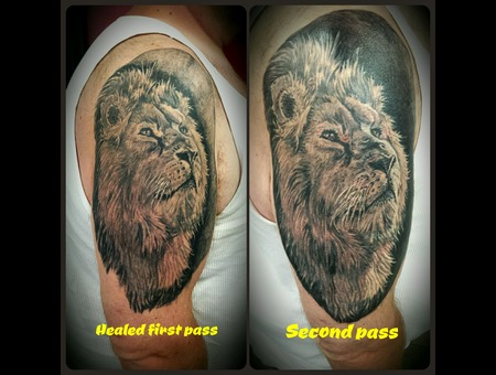 Cover Up  Lion  Animal  Realism  Realistic  Real Black Grey Arm
